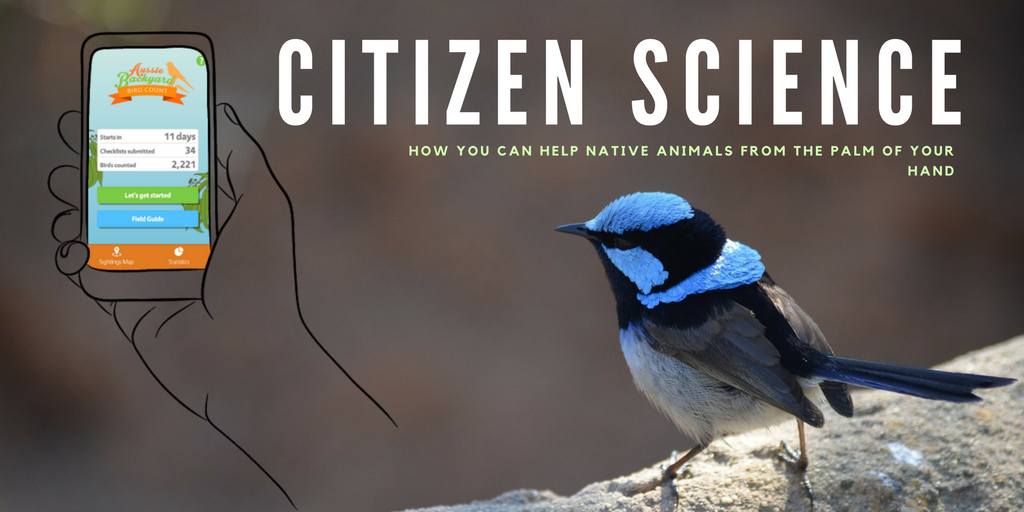 Citizen Science: How you can help native animals from the palm of your hand