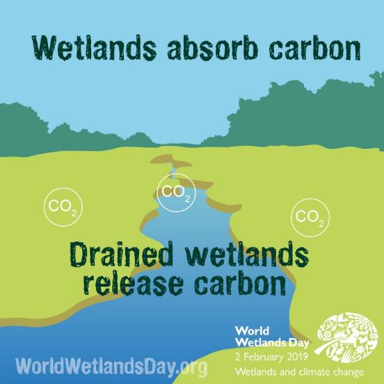 Wetlands climate change