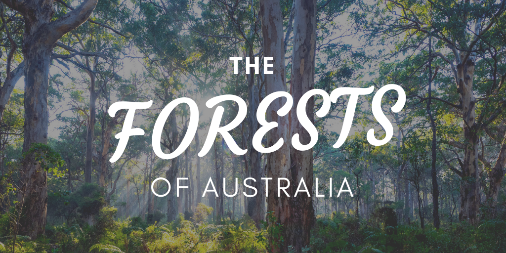 The Forests of Australia