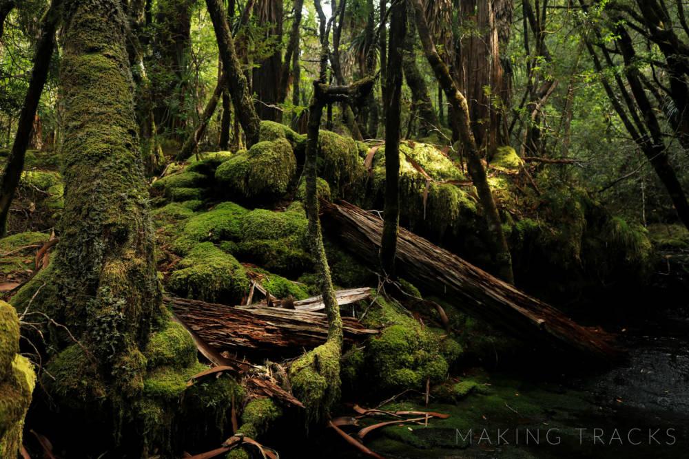 Australia Forests