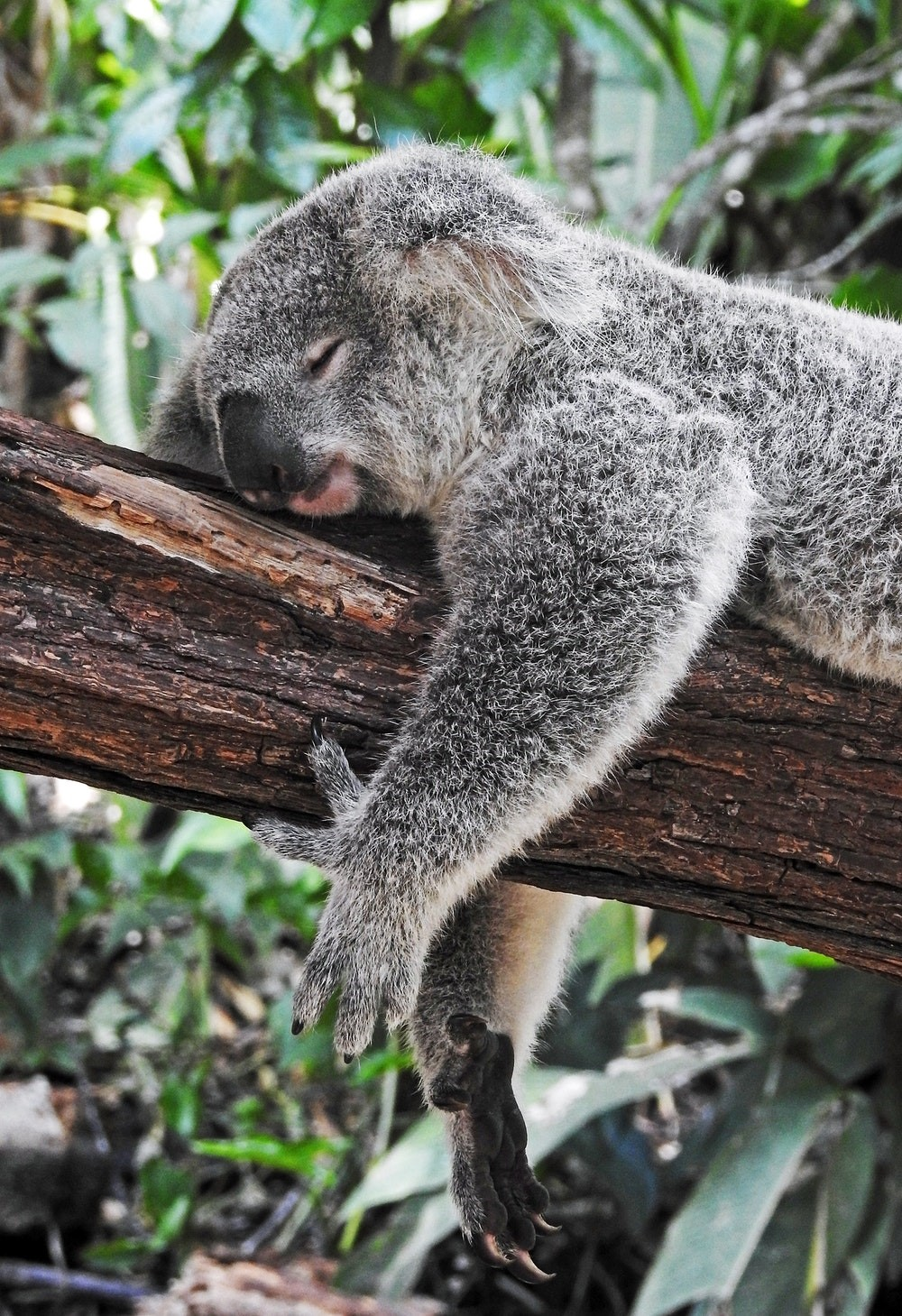 EIA Queensland