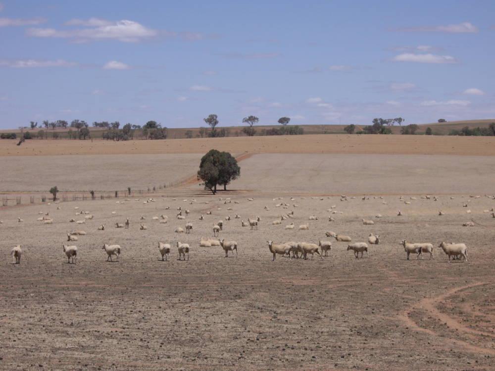 Drought Australia Regions
