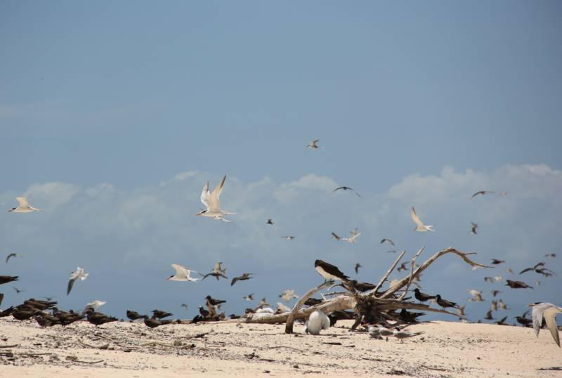 Birds Wind