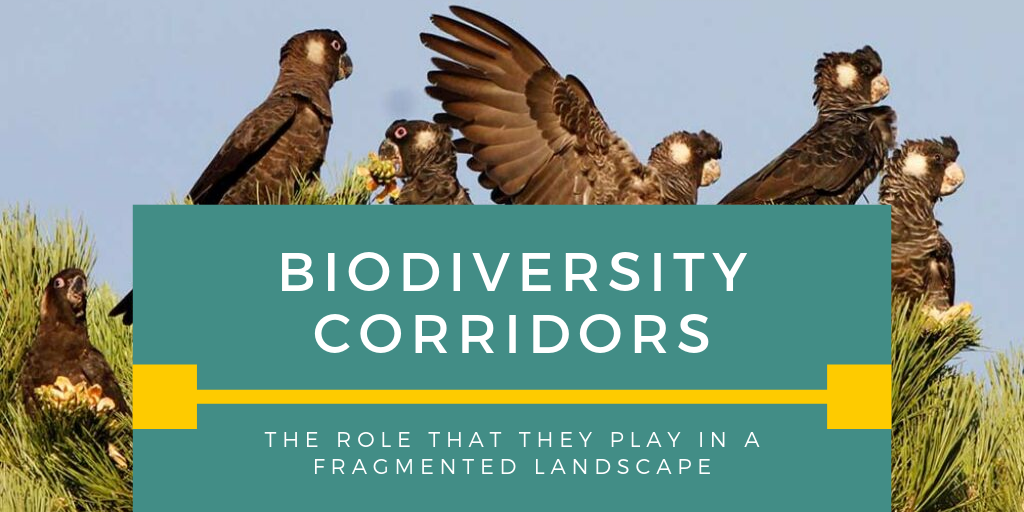 Biodiversity Corridors – The role that they play in a fragmented landscape