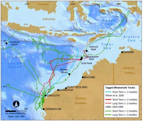 Whale Shark Tracking GIS
