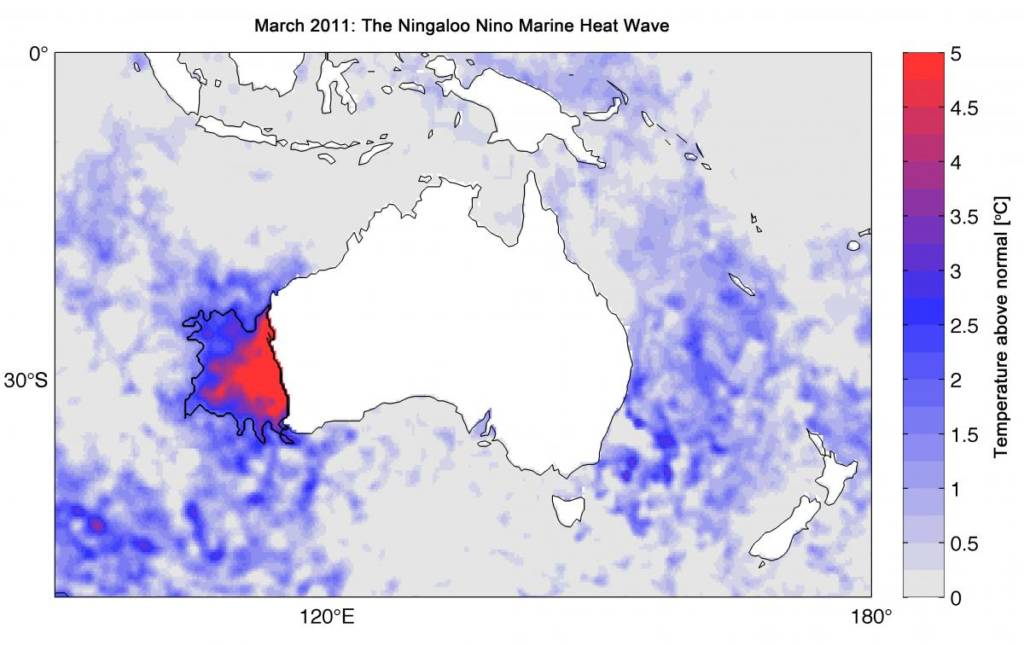Physical Oceanography Ningaloo Nino Marine Heatwave