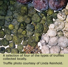 Collection of Native Truffles