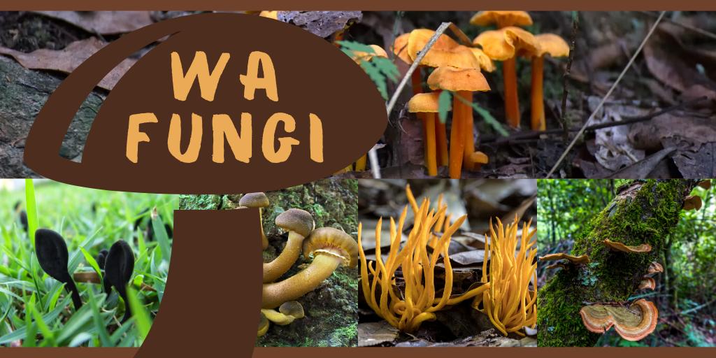 WA Fungi