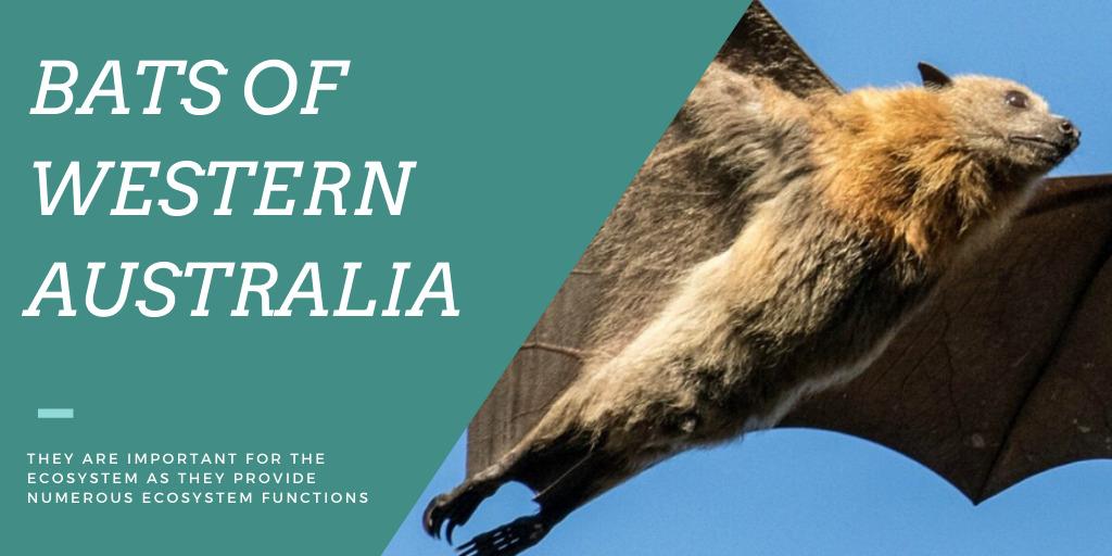 Bats of Western Australia